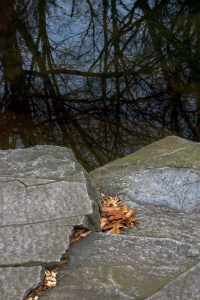 Wetland Overlook