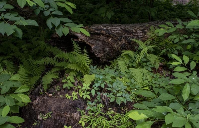 On A Fallen Log