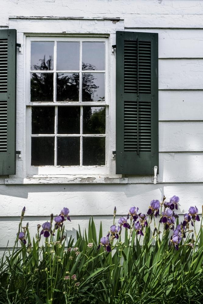 Window with Irises