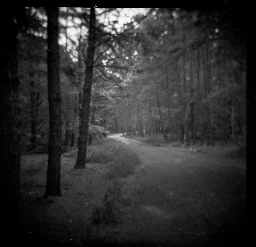 Cheesequake Trail