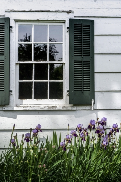Window with Irises